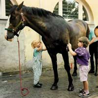 Larger domestic animals are also catered for in Hamburg. You will find many riding stables on the outskirts of the city and in the surrounding area.